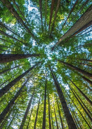 Sustainable forestry certification